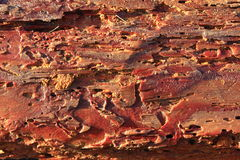 Pine bark ate away by Common furniture beetles Stock Photo
