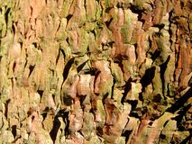 Pine bark background Royalty Free Stock Photo