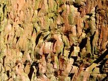 Pine bark background Royalty Free Stock Photo