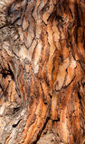 Pine bark background Stock Image