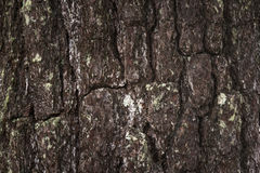 Pine of bark background Royalty Free Stock Images