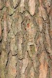 Pine bark background Stock Photos