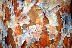 Pine bark Royalty Free Stock Images