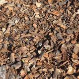 Pine bark , closeup Royalty Free Stock Images