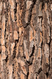 Pine bark Stock Photos