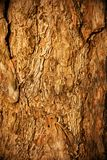 Pine bark Royalty Free Stock Photo