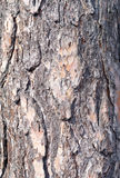 Pine bark Stock Photo