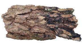 Pine bark isolated Stock Image