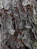Pine bark - macro detail Stock Images