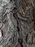 Pine bark - macro detail Stock Photography