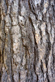 Pine bark Royalty Free Stock Photography
