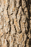 Pine bark and shadows Royalty Free Stock Image