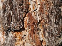 Pine bark Royalty Free Stock Photos