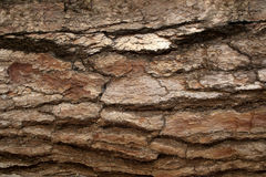 Pine Bark Surfaces Texture Backgrounds, Texture 7. A series of photos. Pine Bark stock photo