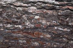 Pine Bark Surfaces Texture Backgrounds, Texture 2 Royalty Free Stock Photo