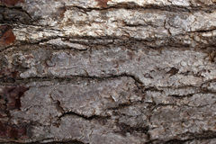 Pine Bark Surfaces Texture Backgrounds, Texture 1 Stock Images