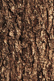 Pine bark texture pattern Stock Image
