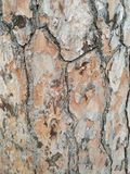 Pine bark textures with brown tones. A isolated tree trunk stock photos