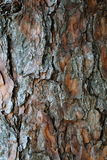 Pine bark, wood natural background. Vertical Royalty Free Stock Photography
