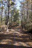 Pine Barrens Path. A pine tree lined path in the storied pine barrens of New Jersey Stock Image