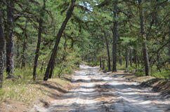 Pine Barrens Road Royalty Free Stock Photos