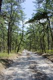 Pine Barrens Road Stock Photo