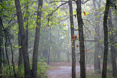 Pine Barrens Sunshower. A Sunshower in the Pinelands of New Jersey, Wharton State Forest stock image