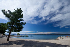 Pine On The Beach. Pine on the pebble beach, Crikvenica, Croatia Royalty Free Stock Photos