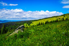Pine Beetle affected forest in the Shuswap Highlands. Of British Columbia, Canada stock photos