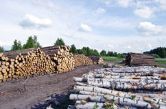 Pine and birch Timber Logs Stacked on field near forest Royalty Free Stock Image