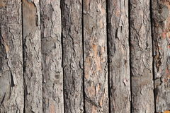 Pine board texture Stock Photography