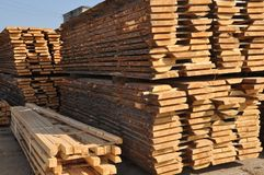 Pine boards on a frame-saw. Storage of pine boards in stock Stock Photography