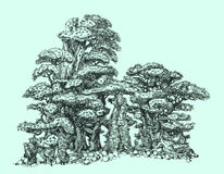 Pine bonsai on rocks. Pen drawing. Illustration of a small bonsai Stock Image