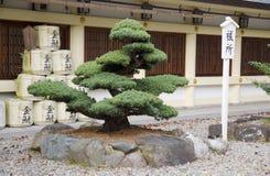 Pine bonsai. Pine treated as bonsai in japanese park Stock Photos