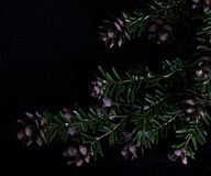 Pine bough with pine cones on black background. Pine bough with pine cones on black wood background Stock Images