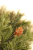 Pine boughs. Closeup of artificial pine boughs and pine cone.  White background Royalty Free Stock Photos