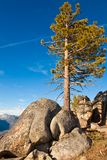 Pine and Boulders Royalty Free Stock Photos