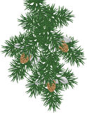 Pine branch. An illustration of a snowy pine bough Royalty Free Stock Photography