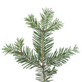 Pine branch. Cutting Royalty Free Stock Photography