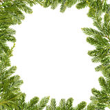 Pine Branch Border Stock Images