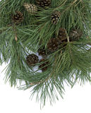 Pine branch branches with cones on a white background Stock Photo
