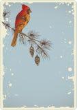 Pine branch and cardinal bird Royalty Free Stock Photos