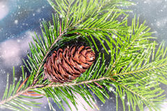 Pine branch with cone with falling snow. Can be used as background Stock Photo