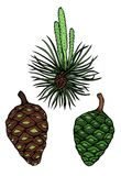 Pine branch with cone. Hand drawn vector pattern illustration Wrapping, surface decoration Stock Photo