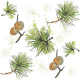 Pine branch with cone pattern Stock Photography