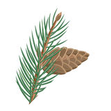 Pine Branch with Cone Vector in Flat Design Royalty Free Stock Photo