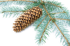 Pine branch with cone on white background. Pine branch with cone on a white background close-up. horizontal photo Royalty Free Stock Photography