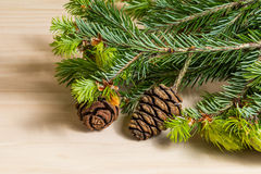 Pine branch and cone Royalty Free Stock Images