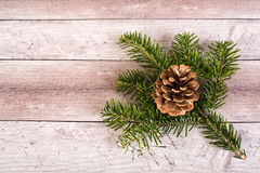 Pine branch and cone on a wooden background Royalty Free Stock Images