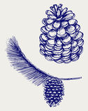 Pine branch with cones Stock Photography